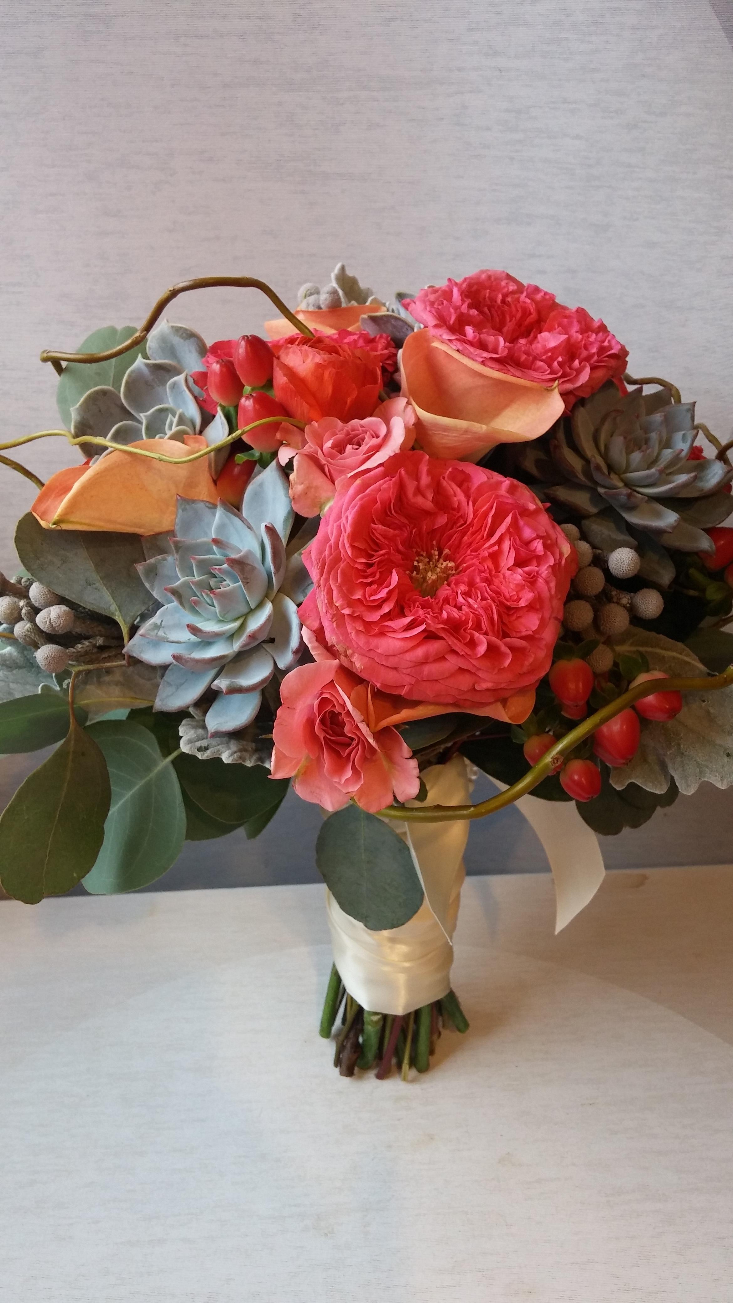 Coral Garden Rose coral rose, minneapolis, garden rose, coral garden rose, succulent